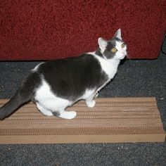 DIY cardboard cat scratcher