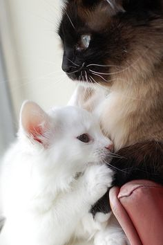 MY 2 Cats <3