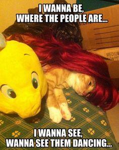 cats, kitten, laugh, ariel, funni, the little mermaid, disney, people, kitty