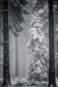 dark forest, express photo, deep winter, winter wonderland