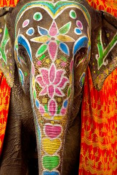 This majestic elephant has its face accented with face paint #Bali