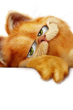Garfield.... I love this picture.....