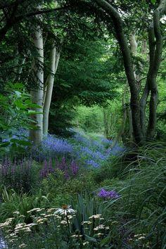 Woodland garden.