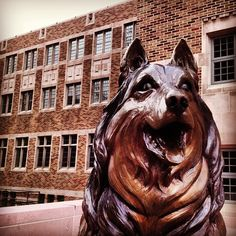 Husky Statue. WOOF!