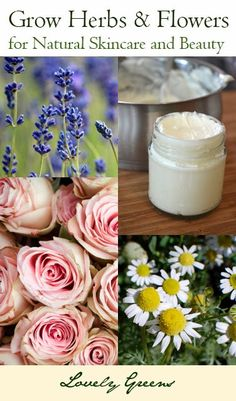 So many beautiful garden herbs and flowers have beneficial properties that you can use to make your own handmade beauty products! Learn about some of them in this first post of the 'Growing a Beauty Garden' series from Lovely Greens.
