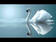 beautiful... Clair de Lune ~ Debussy
