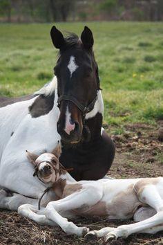 Horse & baby