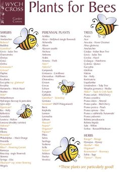 Current farming practices leave bees without enough food year round.  Help gives bees something to thrive on and plant some of these.