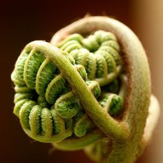 curled-fern-leaf_Photograph by Chris Durietz