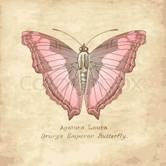 vintage butterfly images   Stock vector of 'Vintage Butterfly'