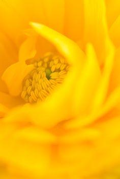 yellow ~
