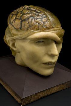 wax anatomical model of a human head