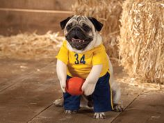 basketball players, halloween costume ideas, dog dresses, dress up, dog costum