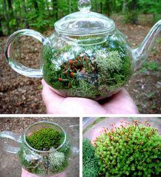 plant, teapot, tea time, tiny gardens, alice in wonderland, little gardens, afternoon tea, mini gardens, moss garden