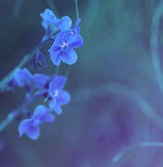 Forget-me-nots #photography #flowers #garden #blue #decor #zen