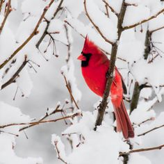 The goodness of nature.  I love cardinals.