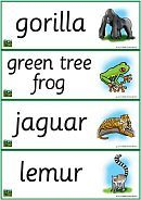 rainforest classroom theme - words