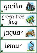 rainforest classroom theme - words