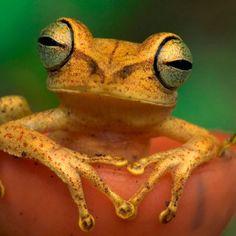 frog - how's it hangin'
