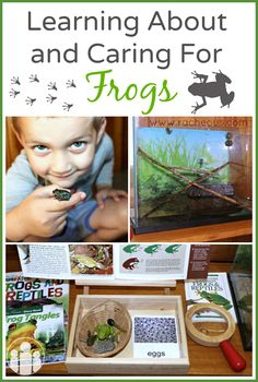 Learning About and Caring For Frogs | Racheous - Lovable Learning