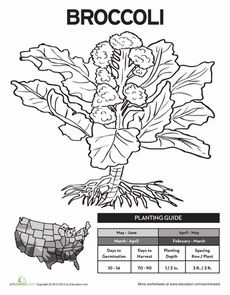 Coloring Page/Planting Guide for Gardening Journal