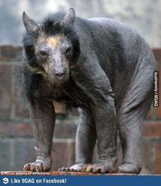Never shave a bear...creepy. It haunts my dreams.