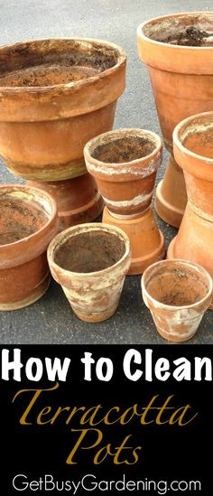 Some people like the look of crusty old terracotta pots, but I prefer mine to look brand new (plus using crusty old pots can spread disease and pests). Follow these simple steps to clean terracotta pots! | GetBusyGardening.com