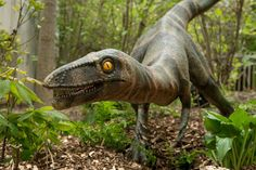 The Dinosaurs are coming to the Columbus Zoo! The exhibit is set to open tomorrow! Zoombezi Bay opens Saturday!