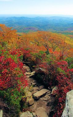 Hike along the Blue Ridge Parkway in North Carolina during peak fall color.
