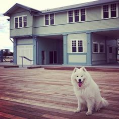 """""""I'm exploring the new Princes Pier redevelopment... not many dogs around though!"""" said Moko. Shot by mokochino, using Instagram"""