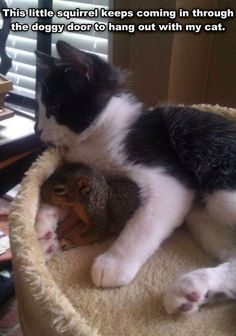 This kitten adopted a squirrel!