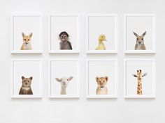 Set of 8 Prints from Animal Print Shop