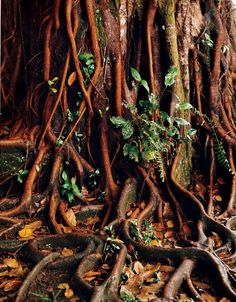 In Tortuguero National Park, a tropical wet forest on Costa Rica's Caribbean side, the plant life–including more than 400 species of trees–has an overripe vividness unlike anywhere else.