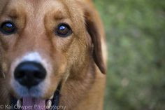 Sammy by rentiana, via Flickr