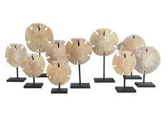 Petrified Sand Dollars - Tim Clarke Design