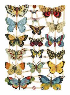 Blumchen butterflies