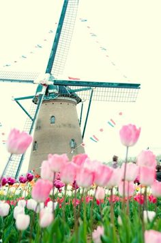 Dutch windmill + tulips