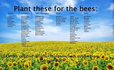 Plant these for the bees!