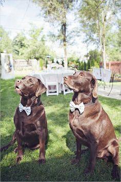 #cao #cachorro #dog