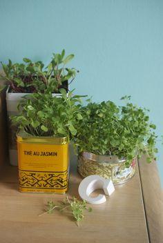 DIY micro greens gardens, in tins - sweet!