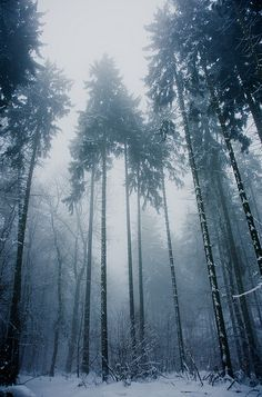 Snowy trees by J e n s, via Flickr