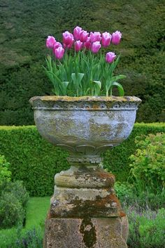 plant, garden statuary, paper bags, purple flowers, tulip, sudeley castl, castl garden, landscape designs, container gardening