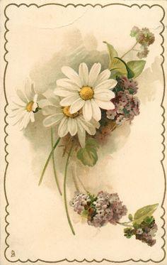 tres margaritas blancas con los centros amarillos, muchas flores de color púrpura