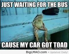 buses, laugh, funni, joke, toad, humor, frogs, meme, bus stop
