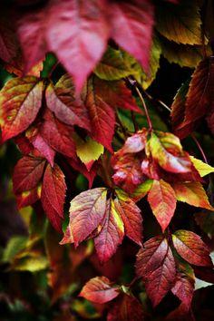 Vigne en automne