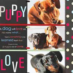dog scrapbook, scrapbook layouts, color, scrapbook idea, puppi