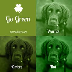 There's so many ways to go green for St Patrick's Day with PicMonkey!