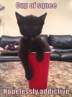 Cup of squee. Hopelessly addictive. #catoftheday