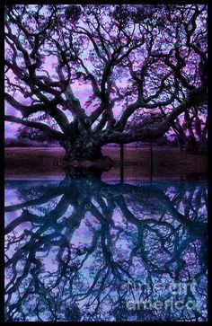 ✯ Amazing image!