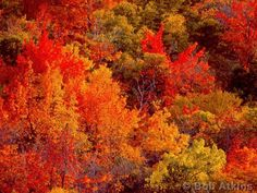 New Hampshire Fall Foliage
